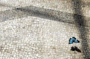 14-May-2009-Rome-Italy-A--015