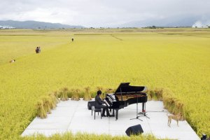 Chishang-Taiwan-Pianist-C-029
